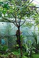 Conservatoire botanique national de Brest-Poupartia castanea-15 07 03-Philweb-02 (19196782719).jpg