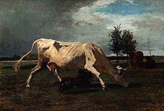 Kuh, von einem Hund verfolgt
