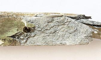 Corrosión por exfoliación en aluminio - 01.jpg