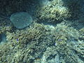 Costa Cabo de Gata 57.JPG