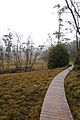 Cradle Mountain National Park walk (5398456735).jpg