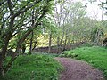 Craigmoor Wood - geograph.org.uk - 803021.jpg