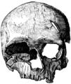 Cro-Magnon-female Skull.png