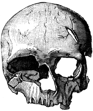 European early modern humans - Cro-Magnon 2, a female skull from the original site