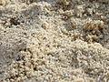Cromer beach sand 2016 01.JPG