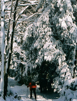 Cross-Country Skiing at Kooser State Park.jpg