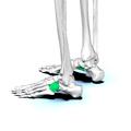 Cuboid bone 03.png