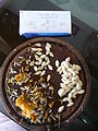 """Cucurbita pepo """"zapallo de Angola"""" semillería La Paulita - fruto cortado (VE09) - sector 4 semillas.jpg"""