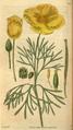 Curtis's Botanical Magazine, Plate 3061 (Volume 58, 1831).png