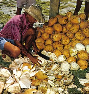Cutting coconuts Seychelles