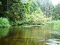 Czarna Hańcza w okolicach Okółka - panoramio.jpg
