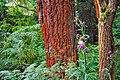 Czerwone drzewa - panoramio.jpg