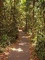 Daintree rainforest - Regenwald (22559448014).jpg