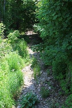Dalmatia Creek schaut stromaufwärts.jpg