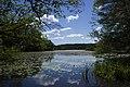 Dammtorpssjön i Nackareservatet.jpg
