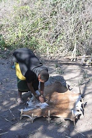 Datooga people - Skinning Hide - Datoga ethnic group, Tanzania