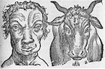 De Humana Physiognomia - Kuh und Mann.jpg