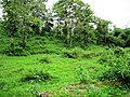 Deep Green Forest @ Sholayar reserve Forest - panoramio (1).jpg