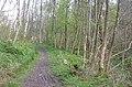 Deepdale Wood - geograph.org.uk - 7090.jpg