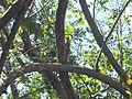 Del Bosque, 77019 Chetumal, Q.R., Mexico - panoramio - holachetumal.jpg