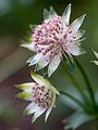 Delicate flower (9027047529).jpg