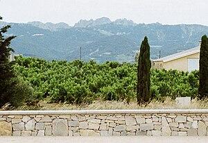Rasteau AOC - Image: Dentelles seen from Rasteau