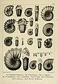 Description des mollusques fossiles qui se trouvent dans les grès verts des environs de Genève (9525359724).jpg