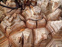 Dioscorea elephantipes 04 ies.jpg