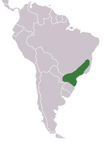 egzotinių opcionų prekyba amazon