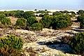 Doñana 1986 14.jpg