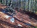Doline in Steilstufe des Muschelkalks zwischen Bad Berka und Saalborn 08.jpg