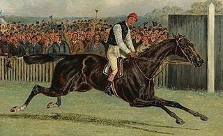 Dutch Oven British-bred Thoroughbred racehorse