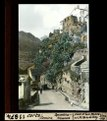 ETH-BIB-Corte, Corsica, Opuntien-Felswand-Dia 247-11874.tif