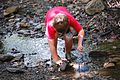 Each summer one of the most popular programs at Hungry Mother State Park is the Critter Crawl where the participants investigate what lives in a creek at the park. - AA (19119323125).jpg