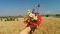 Earth laughs in flowers.jpg