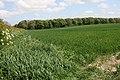 East Plantation, Walkington Wold - geograph.org.uk - 802225.jpg