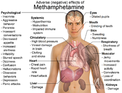 Effects of metamphetamine.png
