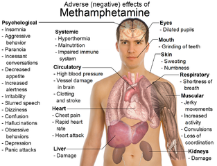 Tjhe effects of metamphetamine