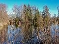 Ein See im Pfrunger-Burgweiler Ried.jpg