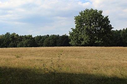 Einzelner Baum auf großem Feld.jpg