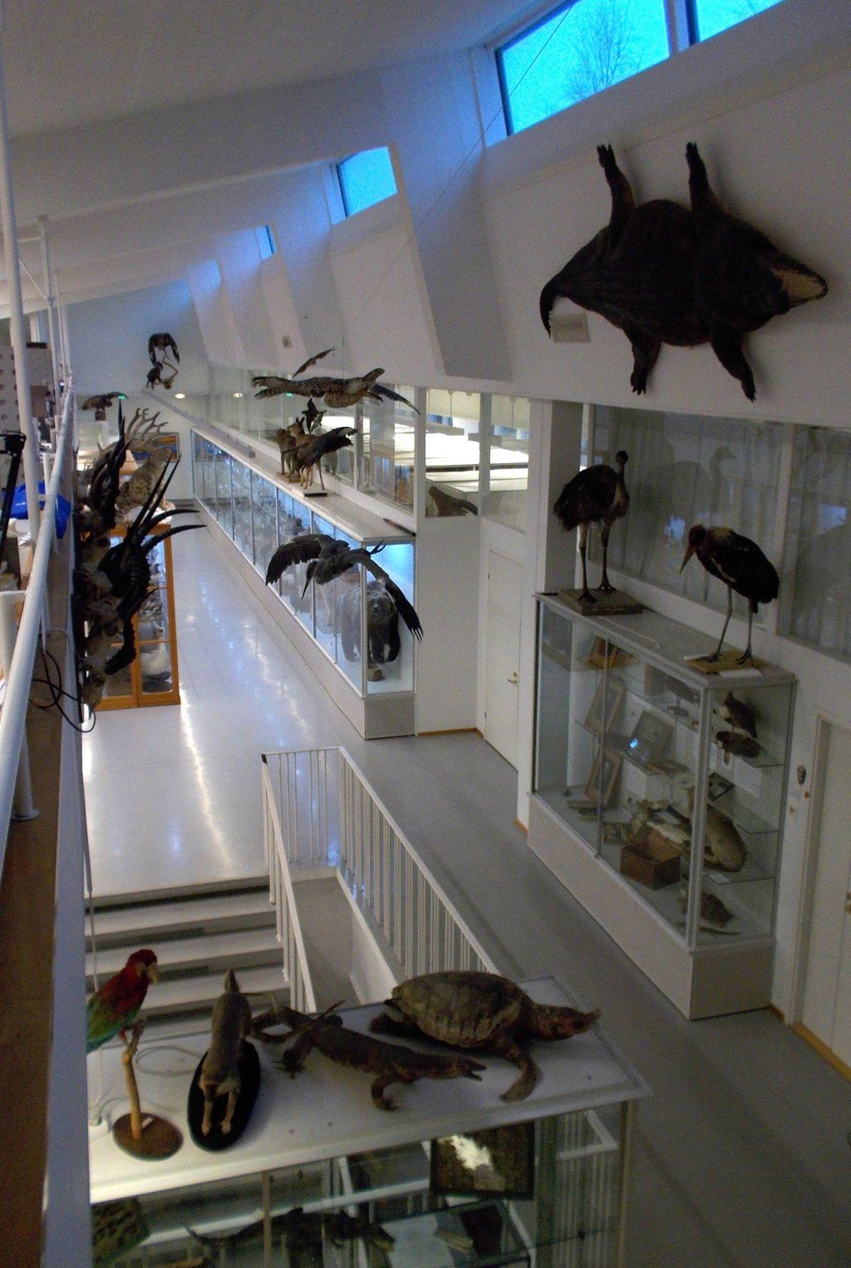 Luonnontieteellinen Museo Turku