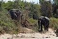 Eléphants du désert-Namibie.jpg