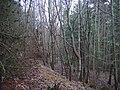 Eldbotle Wood. - geograph.org.uk - 102418.jpg