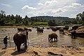 Elephant Bathing at Pinnawala Elephant Orphanage, 2015-04-04-1.jpg