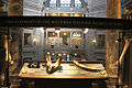Elephant discovery station - Smithsonian Natural History.JPG