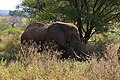 Elephants, Tarangire National Park (20) (28622343181).jpg