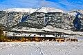 Elk below Grotto Mountain - panoramio.jpg