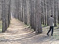 Engels, Saratov Oblast, Russia - panoramio (18).jpg