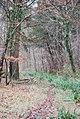Entering Brickles Wood - geograph.org.uk - 642160.jpg