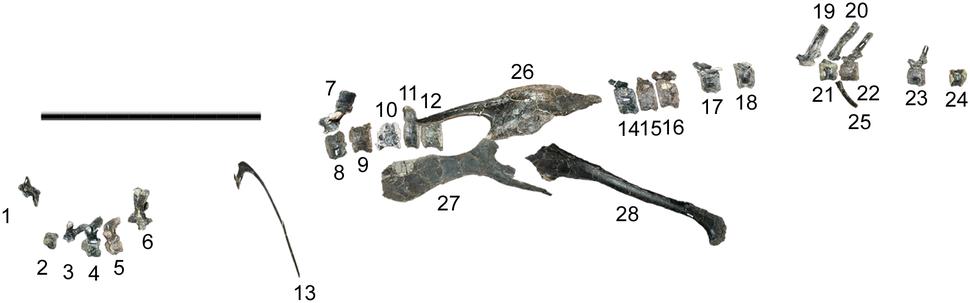 Eolambia FMNHPR3847